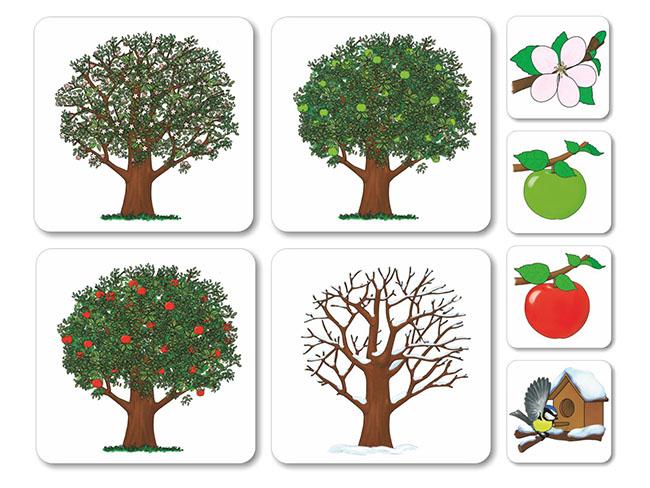 magneticke karty na vyuku temy ovocie a zelenina